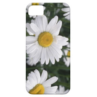 Daisy  the flower for 5th anniversary iPhone 5 cover