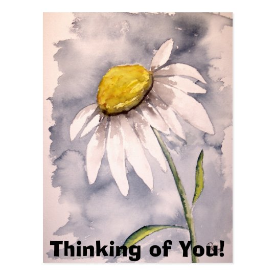 daisy, Thinking of You! Postcard