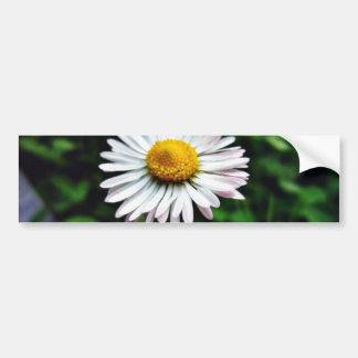 Daisy White Flower Bumper Sticker