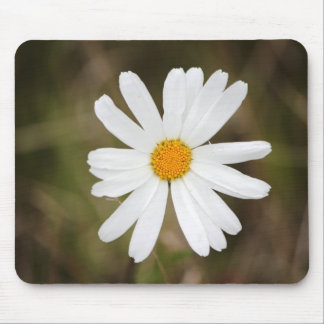 Daisy with a Rain Droplet Print Mouse Pad