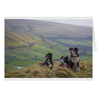 Dales dogs card