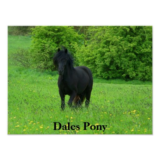 Dales Pony Poster