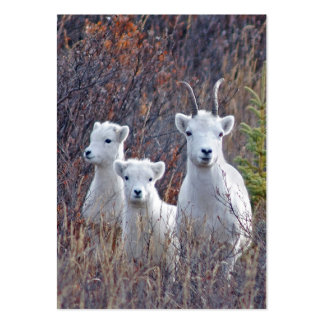 Dall Sheep Ewe with Lambs Wildlife Guide Card Pack Of Chubby Business Cards