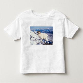dall sheep, Ovis dalli, full curl ram on a 2 Toddler T-Shirt