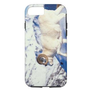 dall sheep, Ovis dalli, full curl ram on a iPhone 8/7 Case