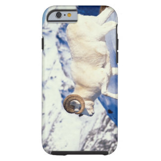 dall sheep, Ovis dalli, full curl ram on a Tough iPhone 6 Case