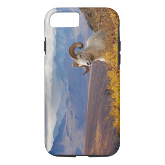 dall sheep, Ovis dalli, ram resting on a iPhone 8/7 Case