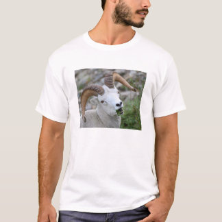 Dall Sheep T-Shirt