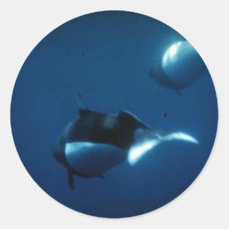Dall's porpoise sticker