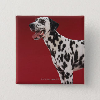 Dalmatian 15 Cm Square Badge