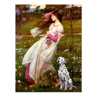 Dalmatian 1 - Windflowers Postcard