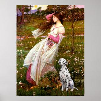Dalmatian 1 - Windflowers Print
