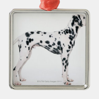 Dalmatian 3 christmas ornament