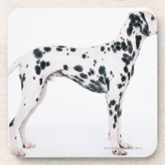 Dalmatian 3 coaster