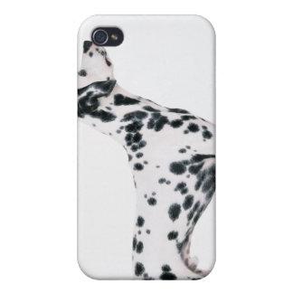 Dalmatian 3 iPhone 4 cases