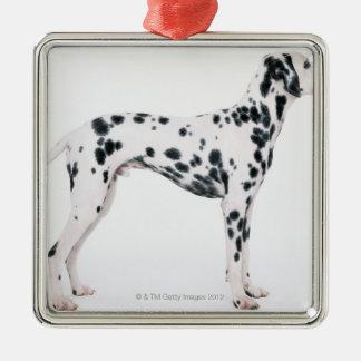 Dalmatian 3 Silver-Colored square decoration