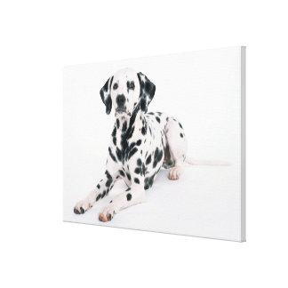 Dalmatian 4 canvas print