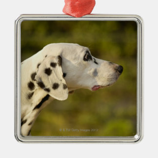 Dalmatian 4 christmas ornament
