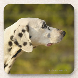 Dalmatian 4 coaster