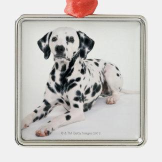 Dalmatian 4 Silver-Colored square decoration
