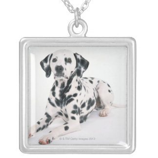 Dalmatian 4 silver plated necklace