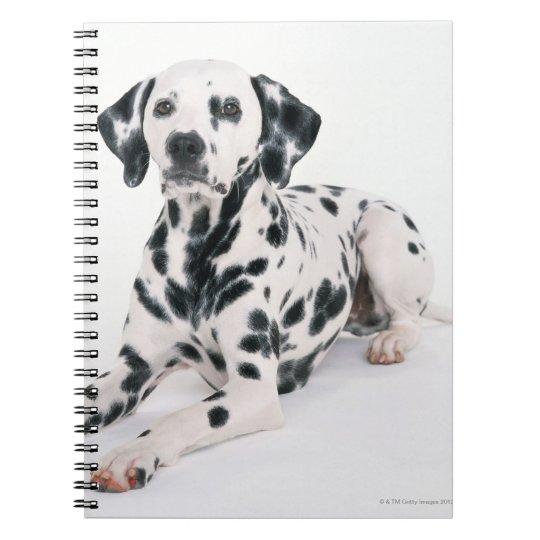 Dalmatian 4 spiral notebook