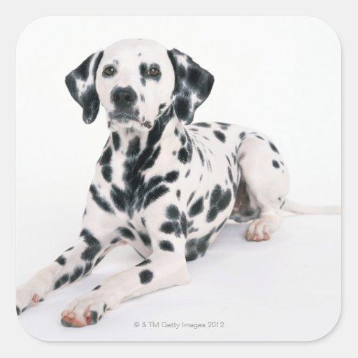 Dalmatian 4 square stickers