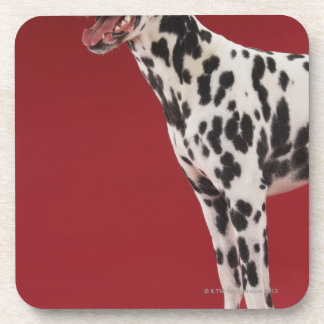 Dalmatian 6 drink coaster