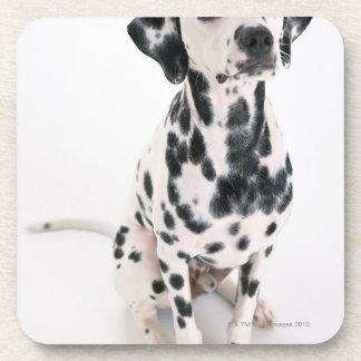 Dalmatian Coaster