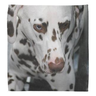 Dalmatian Dog Bandana
