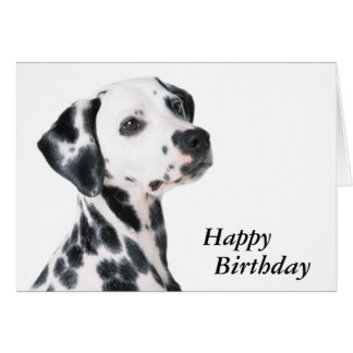 Dalmatian dog beautiful photo custom birthday card