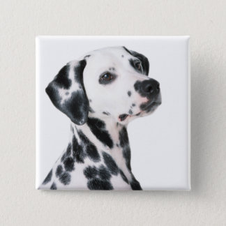 Dalmatian dog beautiful photo, gift 15 cm square badge