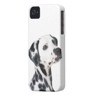 Dalmatian dog beautiful photo gift iPhone 4 case