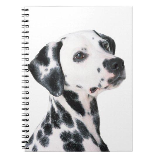 Dalmatian dog beautiful photo, gift notebooks