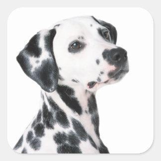 Dalmatian dog beautiful photo, gift square stickers