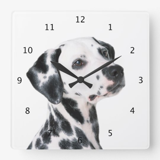 Dalmatian dog beautiful photo square wall clock