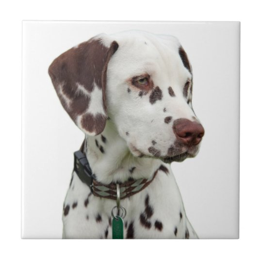 Dalmatian dog beautiful tile or trivet, gift idea