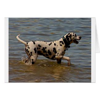 Dalmatian Dog Card