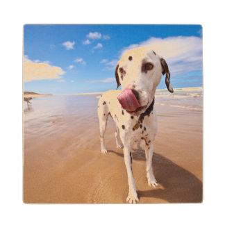 Dalmatian Dog On Beach Maple Wood Coaster