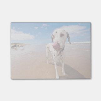 Dalmatian Dog On Beach Post-it Notes