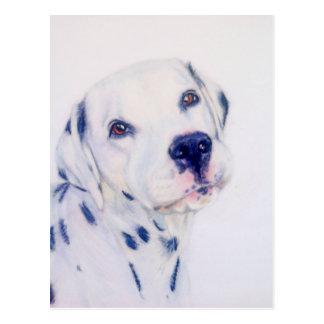 Dalmatian dog postcard