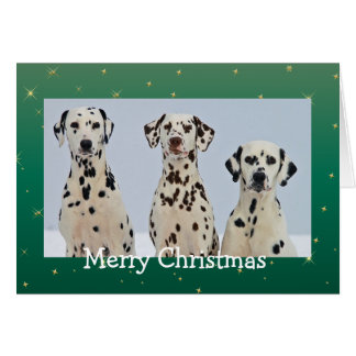 Dalmatian dogs beautiful photo christmas card