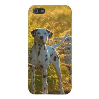 Dalmatian Dogs iPhone 4/4S Case