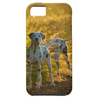 Dalmatian Dogs iPhone 5 Tough Case