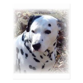 Dalmatian Fire Dog Postcard