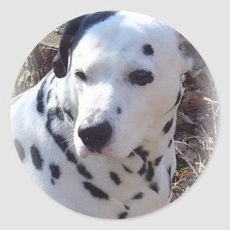 Dalmatian Fire Dog Sticker