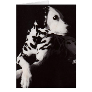 Dalmatian in Black and White Greeting Card