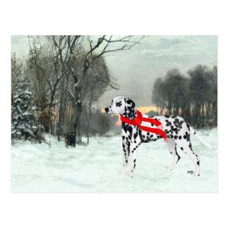 Dalmatian in Winter Snow Postcard