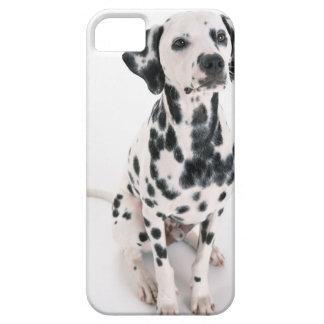 Dalmatian iPhone 5 Cover