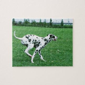 Dalmatian Jigsaw Puzzle